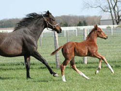Cloud Harbor - Thoroughbred Mare - Thoroughbred 07 Colt-  Retired Racehorse - Broodmare and colt
